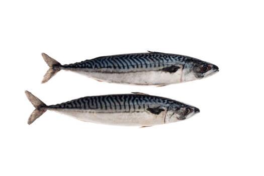 AT5001 Mackerel