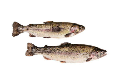 AT501 - Whole Fresh Irish Rainbow Trout