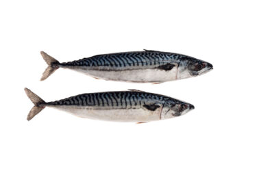 AT5001-Mackerel.jpg
