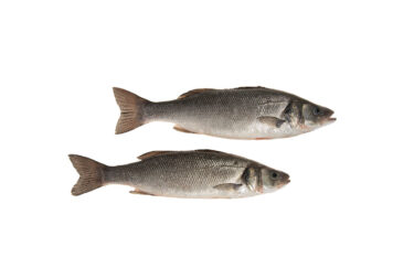 AT601-Sea-Bass.jpg