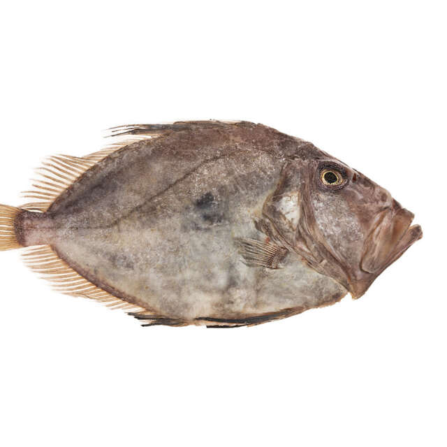 Whole Fresh Wild Irish John Dory