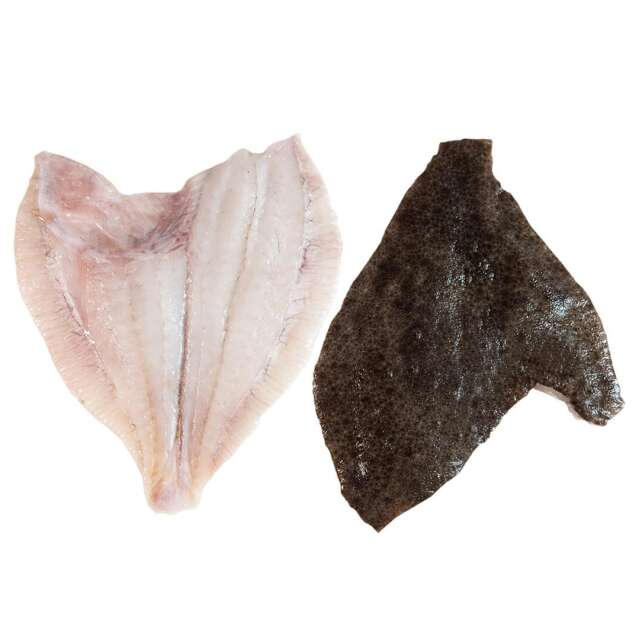 Fresh Wild Irish Turbot Fillets